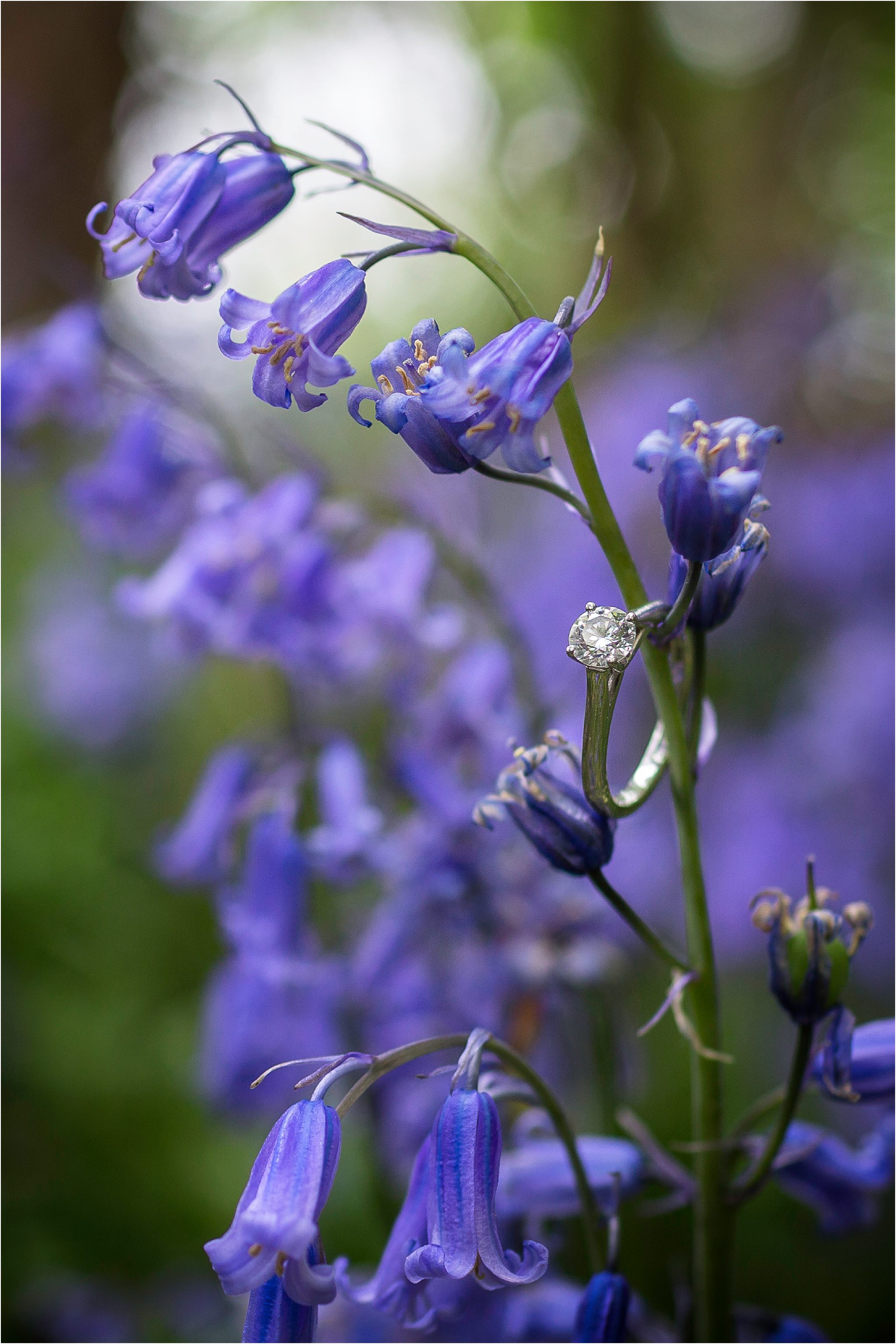 Close up of a bluebell with an engagement ring hanging from it.