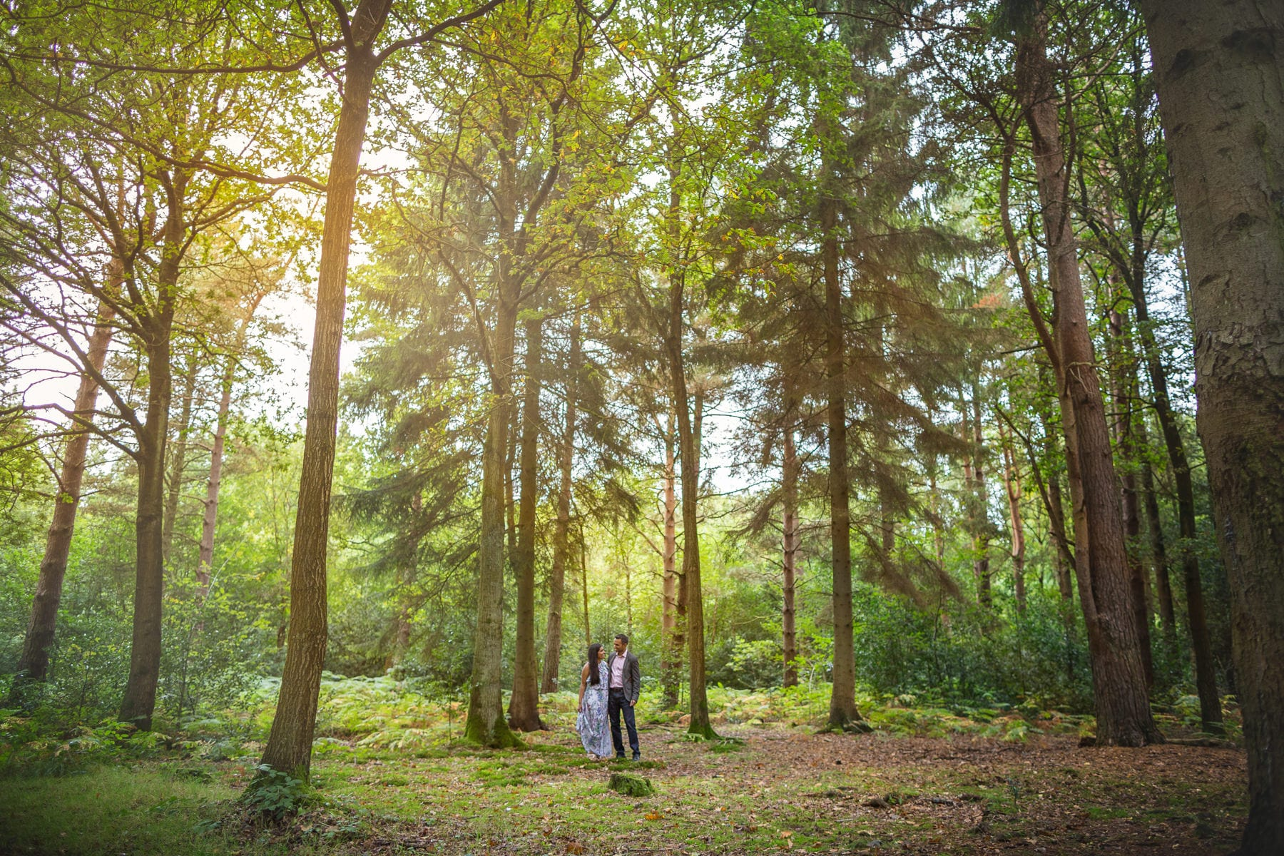 A pre engagement shoot in Hay Woods in Warwickshire. The couple embracing amongst the really tall trees.